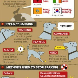 dog bark infographic.png.scaled500 300x300