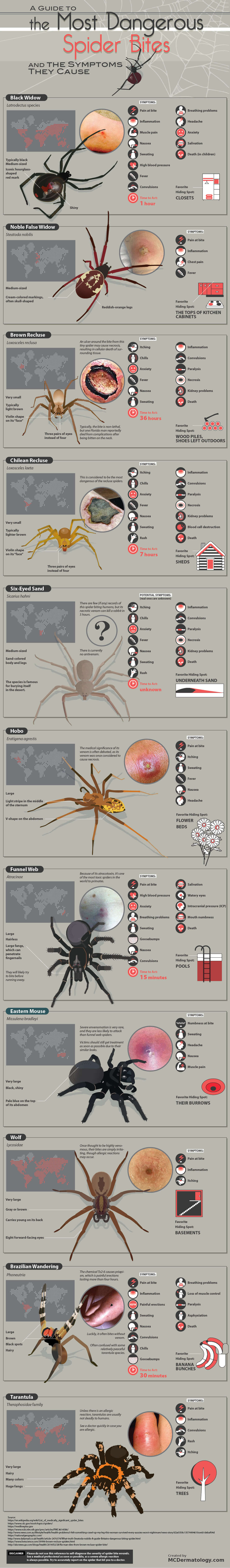 A guide to the most dangerous spider bites and the symptoms they cause