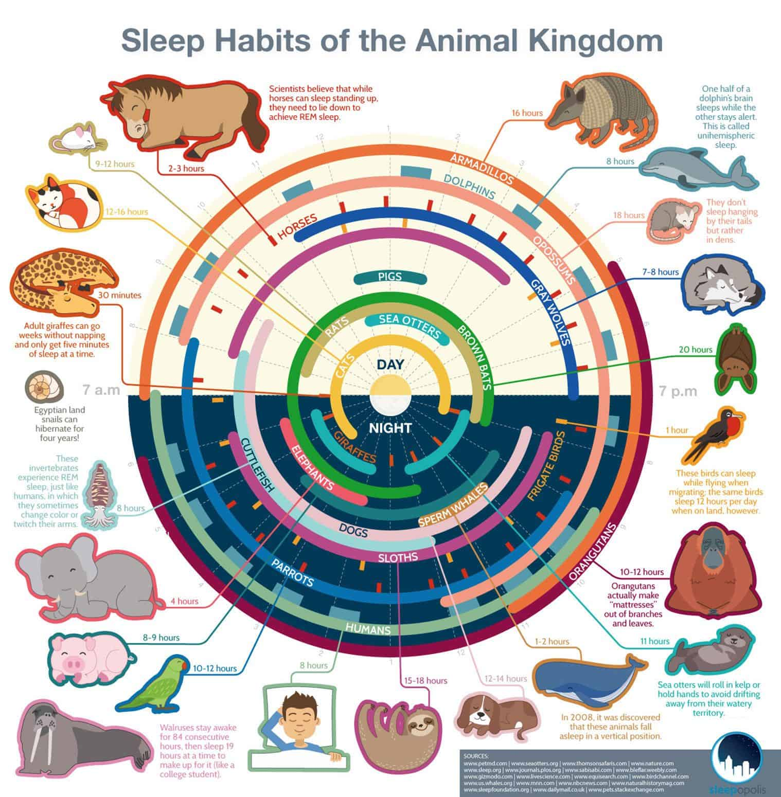 Sleeping habits of animals