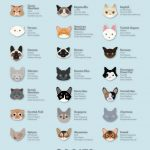 The Best Cat Breeds Visual Guide Funny 150x150 1