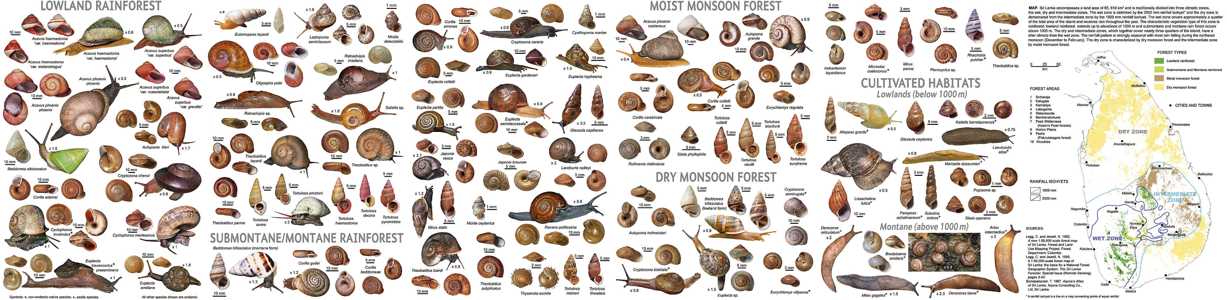 Snail identification guide