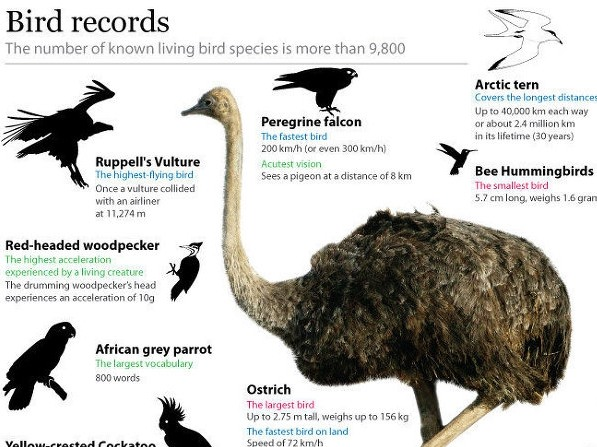 Bird records