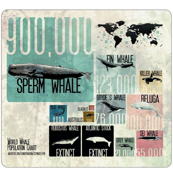 world wide whale population infographic