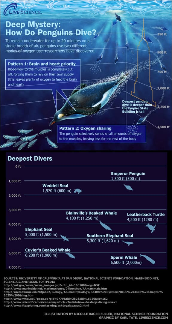 Into the Blue The Oceans Deepest Divers Infographic